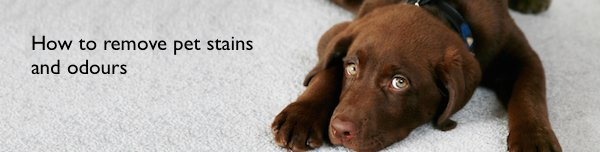 Dog on a carpet - How to remove pet stains and odours